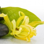 royal_secret_cosmetics_theama_behandeling_ ylang ylang _ Magic _huidverzorging   (2)